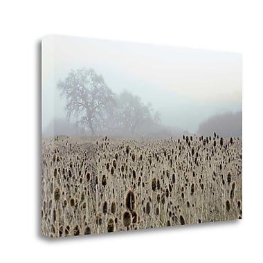 Tangletown Fine Art 'Oak Tree - 61' Photographic Print on Wrapped Canvas; 19'' H x 28'' W