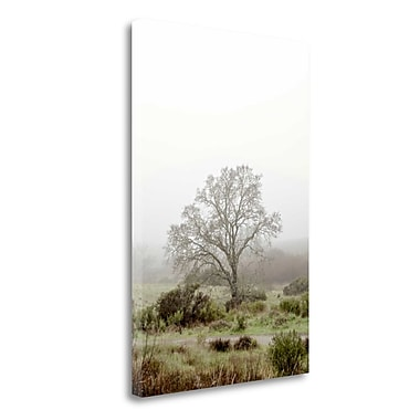 Tangletown Fine Art 'Oak Tree - 56' Photographic Print on Wrapped Canvas; 24'' H x 16'' W