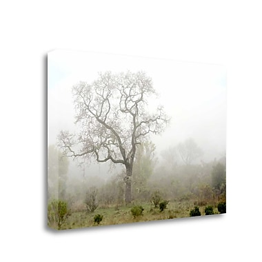 Tangletown Fine Art 'Oak Tree - 62' Photographic Print on Wrapped Canvas; 16'' H x 24'' W