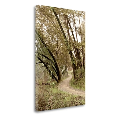 Tangletown Fine Art 'Oak Tree - 49' Photographic Print on Wrapped Canvas; 28'' H x 19'' W