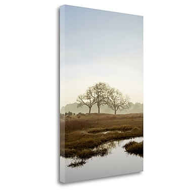Tangletown Fine Art 'Oak Tree - 66' Photographic Print on Wrapped Canvas; 28'' H x 19'' W