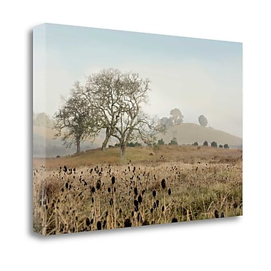Tangletown Fine Art 'Oak Tree - 68' Photographic Print on Wrapped Canvas; 26'' H x 40'' W