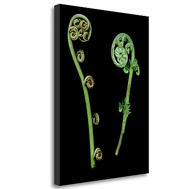 Tangletown Fine Art 'Floral Color - 22' Graphic Art Print on Wrapped Canvas; 33'' H x 25'' W