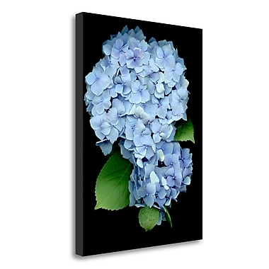 Tangletown Fine Art 'Floral Color - 26' Graphic Art Print on Wrapped Canvas; 24'' H x 18'' W