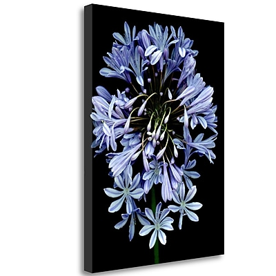 Tangletown Fine Art 'Floral Color - 27' Graphic Art Print on Wrapped Canvas; 24'' H x 18'' W