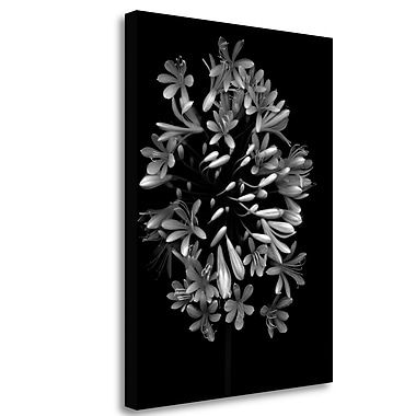 Tangletown Fine Art 'Floral B-W - 28' Graphic Art Print on Wrapped Canvas; 33'' H x 25'' W
