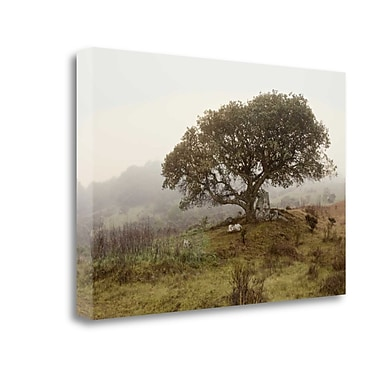 Tangletown Fine Art 'Oak Tree - 54' Photographic Print on Wrapped Canvas; 26'' H x 40'' W