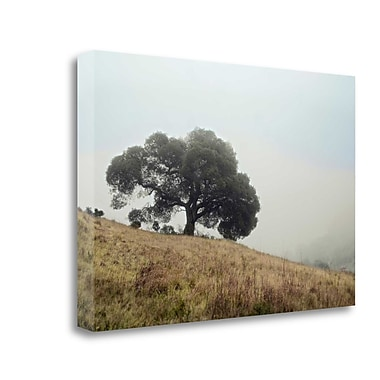 Tangletown Fine Art 'Oak Tree - 53' Photographic Print on Wrapped Canvas; 21'' H x 32'' W