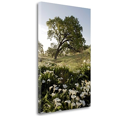 Tangletown Fine Art 'Oak Tree - 90' Photographic Print on Wrapped Canvas; 40'' H x 26'' W