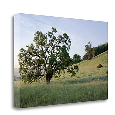 Tangletown Fine Art 'Oak Tree - 86' Photographic Print on Wrapped Canvas; 26'' H x 40'' W