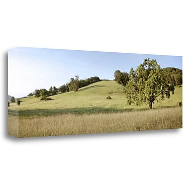 Tangletown Fine Art 'Oak Tree Pano - 99' Photographic Print on Wrapped Canvas; 12'' H x 34'' W
