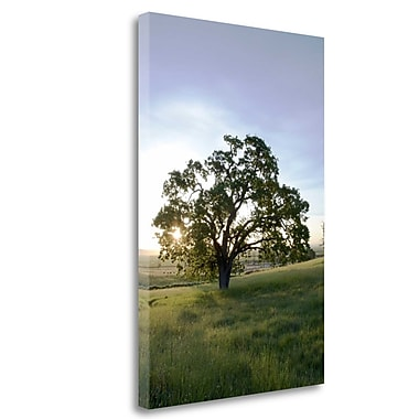 Tangletown Fine Art 'Oak Tree - 95' Photographic Print on Wrapped Canvas; 27'' H x 18'' W