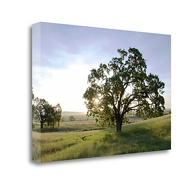 Tangletown Fine Art 'Oak Tree - 96' Photographic Print on Wrapped Canvas; 20'' H x 31'' W