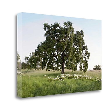 Tangletown Fine Art 'Oak Tree - 93' Photographic Print on Wrapped Canvas; 21'' H x 32'' W