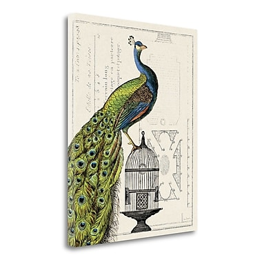 Tangletown Fine Art 'Peacock Birdcage I' by Sue Schlabach Graphic Art on Wrapped Canvas