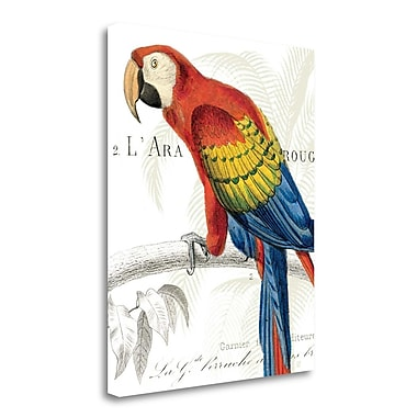 Tangletown Fine Art 'Parrot Botanique II' Graphic Art Print on Wrapped Canvas; 28'' H x 23'' W