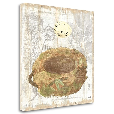 Tangletown Fine Art 'Botanical Nest I' Graphic Art Print on Wrapped Canvas; 20'' H x 20'' W
