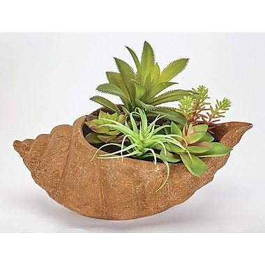 Bungalow Rose Succulent Plant in Shell Pot