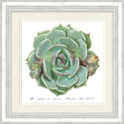 Bungalow Rose 'Be Still And Know Succulent' Framed Graphic Art Print on Paper