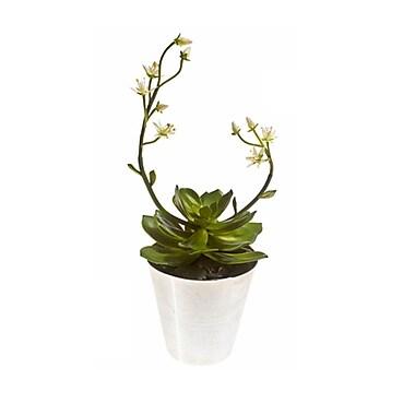 Varick Gallery Succulent Flowering Plant in Aluminum Pot