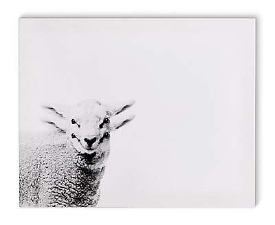 Varick Gallery 'Lamb' Graphic Art Print on Canvas; 24'' H x 36'' W