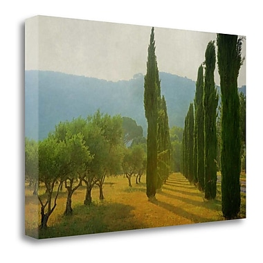 Tangletown Fine Art 'Cypress Shadows' Photographic Print on Wrapped Canvas; 23'' H x 34'' W
