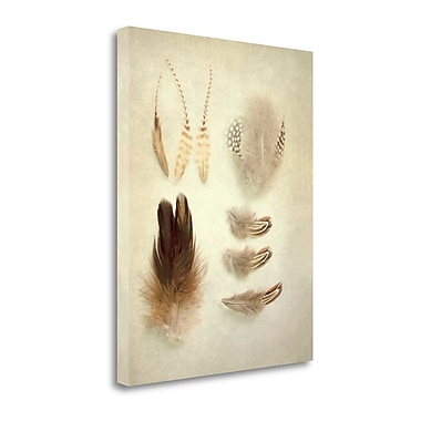 Tangletown Fine Art 'Feathers II' Photographic Print on Canvas; 23'' H x 18'' W