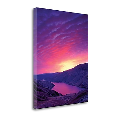 Tangletown Fine Art 'Deep Purple' Photographic Print on Wrapped Canvas; 35'' H x 27'' W