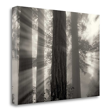Tangletown Fine Art 'Ray of Light' Photographic Print on Canvas; 35'' H x 47'' W