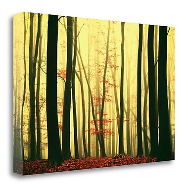 Tangletown Fine Art 'Red Leaves' Photographic Print on Canvas; 16'' H x 24'' W