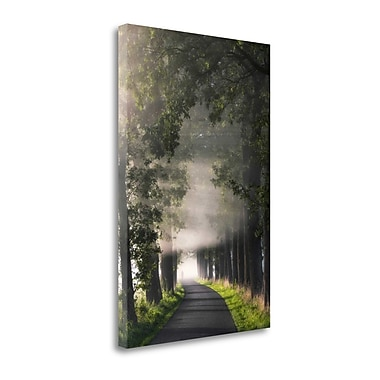 Tangletown Fine Art 'Rays of Fog' Photographic Print on Canvas; 39'' H x 26'' W