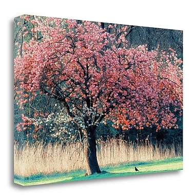 Tangletown Fine Art 'Me and My Tree' Photographic Print on Canvas; 21'' H x 32'' W
