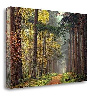 Tangletown Fine Art 'Colors of the Forest' Photographic Print on Canvas; 19'' H x 28'' W