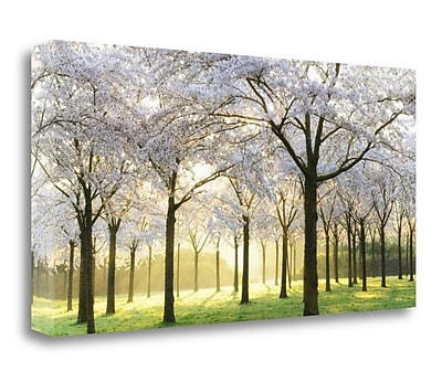 Tangletown Fine Art 'Bridal Trees' Photographic Print on Canvas; 24'' H x 48'' W