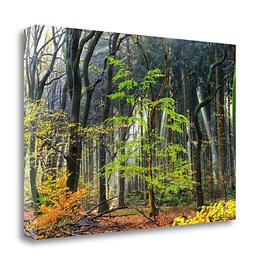 Tangletown Fine Art 'Colors of the Forest IV' Photographic Print on Canvas; 20'' H x 29'' W