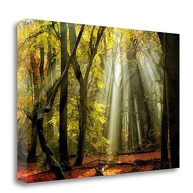 Tangletown Fine Art 'Yellow Leaves Rays' Photographic Print on Canvas; 26'' H x 40'' W