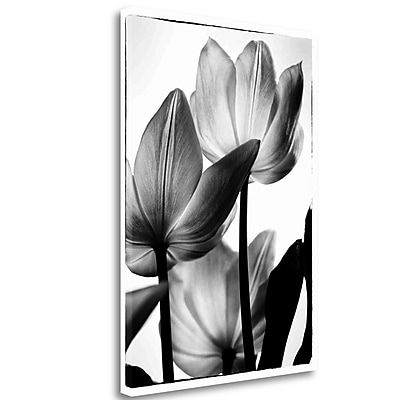 Tangletown Fine Art 'Translucent Tulips III' Photographic Print on Canvas; 27'' H x 19'' W