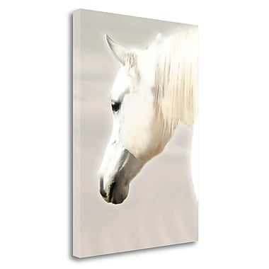 Tangletown Fine Art 'White Arab' Photographic Print on Wrapped Canvas; 27'' H x 20'' W