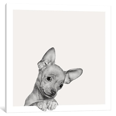 East Urban Home 'Sweet Chihuahua' Photographic Print on Wrapped Canvas; 37'' H x 37'' W x 1.5'' D
