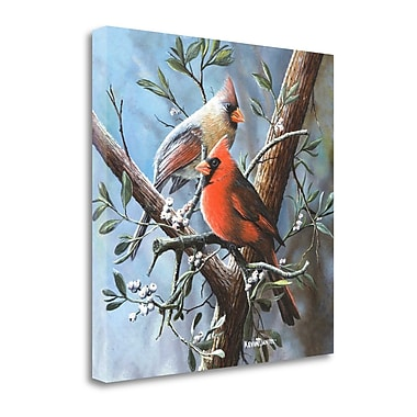 Tangletown Fine Art 'Cardinal' Print on Wrapped Canvas; 24'' H x 24'' W