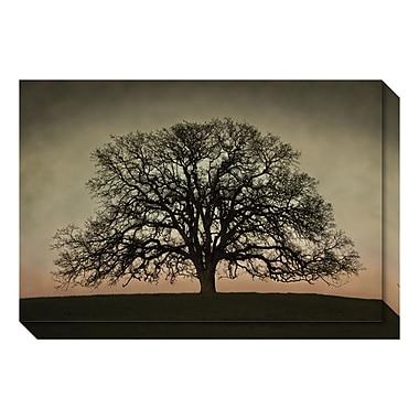 Amanti Art – Toile Galerie par David Lorenz Winston, chêne majestueux, 30 x 20 po (DSW3466654)