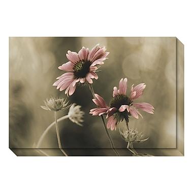 Amanti Art – Toile Galerie par David Lorenz Winston, en harmonie parfaite (floral), 30 x 20 po (DSW3466655)