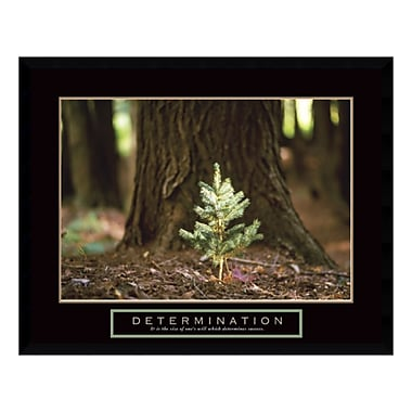 Amanti Art – Imprimé encadré « Determination: Little Pine », 29 x 23 po (DSW3397006)