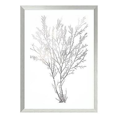 Amanti Art Framed Art Print 'Silver Foil Algae I Metallic Print' by Jennifer Goldberger, 24