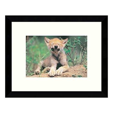 Amanti Art – Impression encadrée, de « Simple Pleasures (Young Wolf) » par Art Wolfe, 11 x 9 po (DSW3422734)