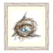 "Amanti Art Framed Art Print 'Bird Nest Study II' by Ethan Harper, 24"" x 24"" (DSW3583091)"