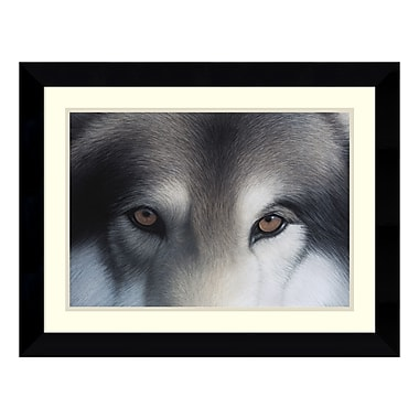 Amanti Art – Reproduction encadrée de « Eyes of the Hunter: Gray Wolf » par Charles Alexander, 27 x 21 po (DSW115226)