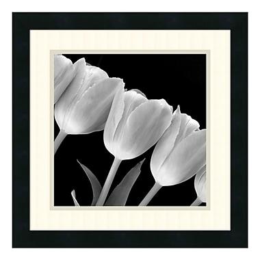 Amanti Art Framed Art Print 'Tulip Line', 18