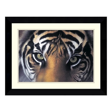 Amanti Art Framed Art Print 'Eyes of the Goddess: Sumatran Tigress' by Charles Alexander, 27