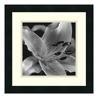 Amanti Art – Imprimé encadré « Speckled Lily » par Gaetano Art Group, 16 x 16 po (DSW114413)